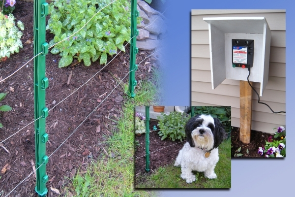 Beautiful Hot Wire Fence For Dogs Electric Fence For Protection Of Plants From Dogs Fences