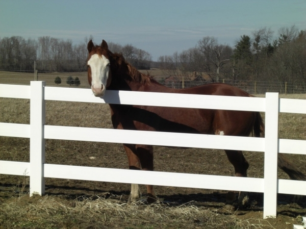 Gorgeous Vinyl Horse Fencing Customized Vinyl Fence Amp Deck Sales Horse Fence Construction In