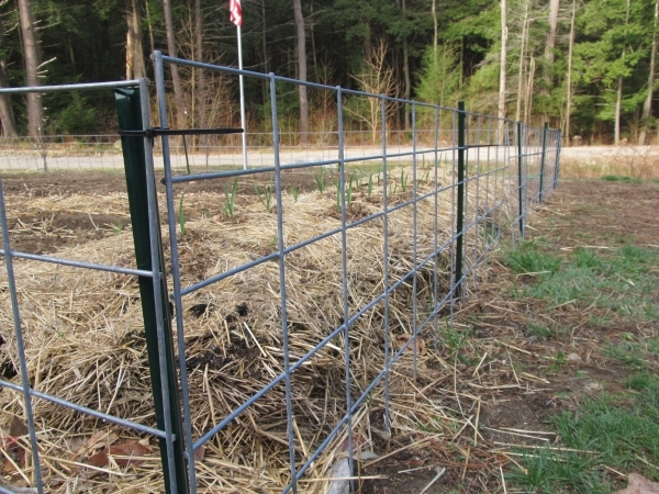 Image of Cattle Fence Panels Quick And Easy Fencing With Cattle Panels Applied Paranoia Blog
