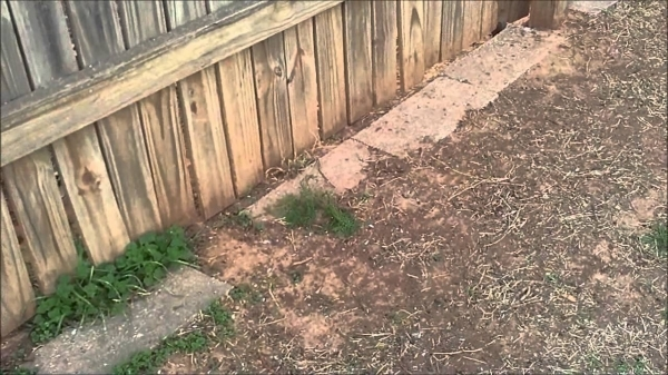 Stop Dog From Digging Under Fence