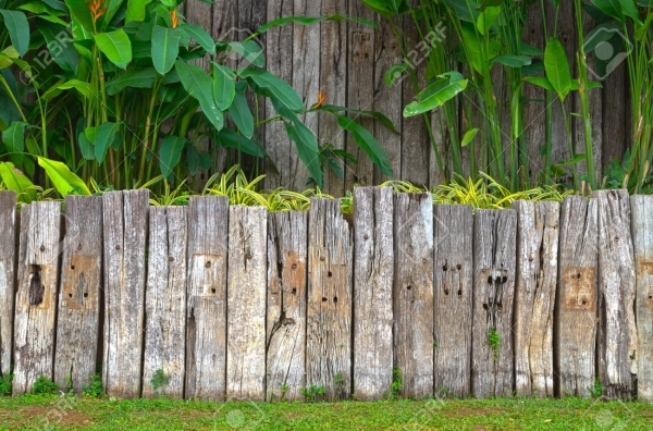 Incredible Wood Garden Fence Old Wooden Fence In Garden With Plant Stock Photo Picture And