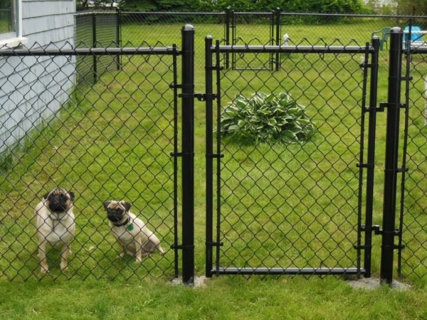 Fencing Ideas For Dogs