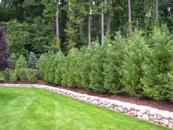 Marvelous Natural Privacy Fence Best Trees And Plants For Privacy Truesdale Landscaping