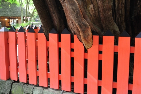 Wood Fence Paint