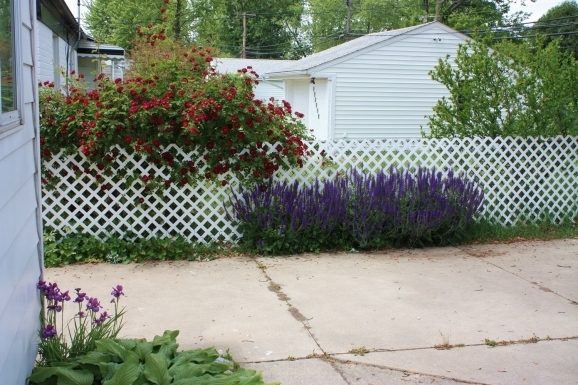 Delightful Cover Chain Link Fence 1000 Images About Yardcore On Pinterest Gardens Concrete Steps