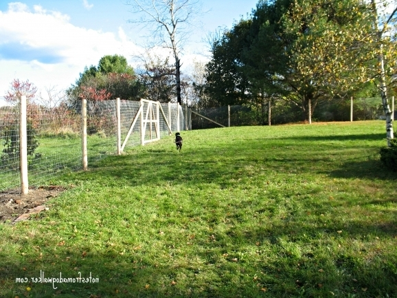 Perimeter Fence For Dogs