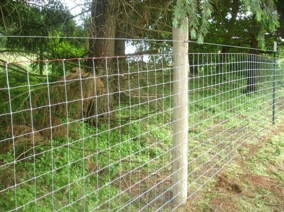 Goat Fencing Ideas