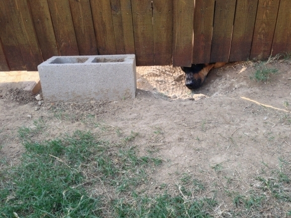 How To Keep Dogs From Digging Under Fence