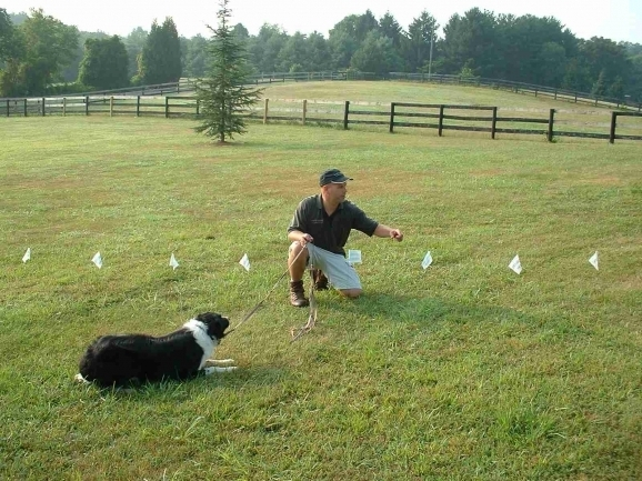 Invisible Fencing For Dogs