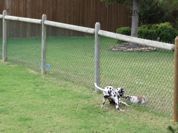Awesome Cheap Dog Fence Options Cheapdogfenceideas Free Issues Of Family Circle Magazine