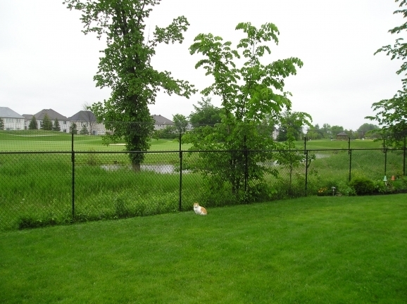 Chain Link Fence Extension