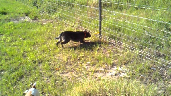 Electric Fence For Dogs