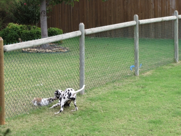 Cheap Fencing Ideas For Dogs