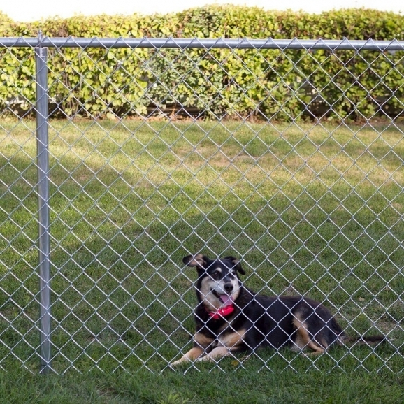 4ft Chain Link Fence