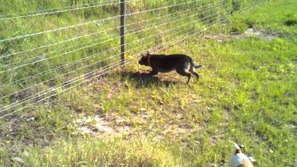 Electric Fence For Dog