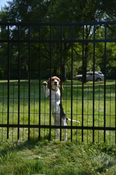 How To Keep Dog In Yard Without Fence