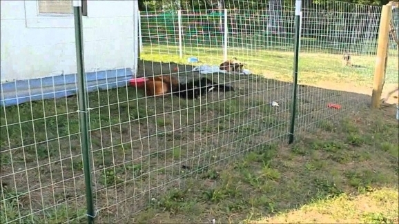 Cheap Fencing For Dogs