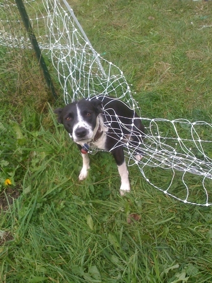 Electronic Fences For Dogs